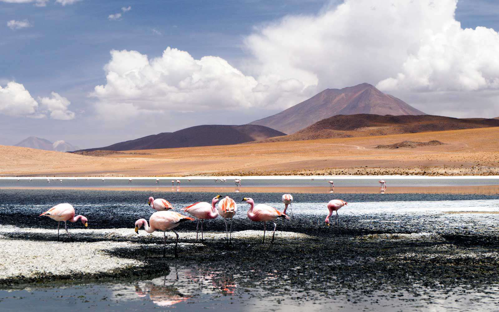 Колонии фламинго, альтиплано, Боливия