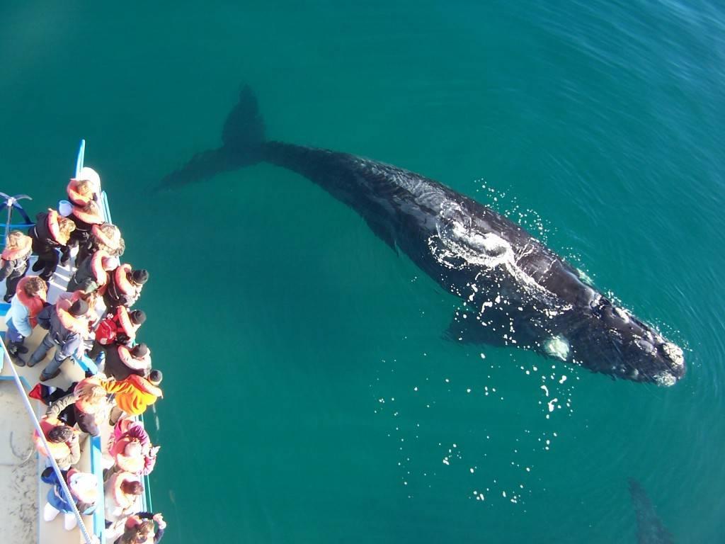 киты в аргентине