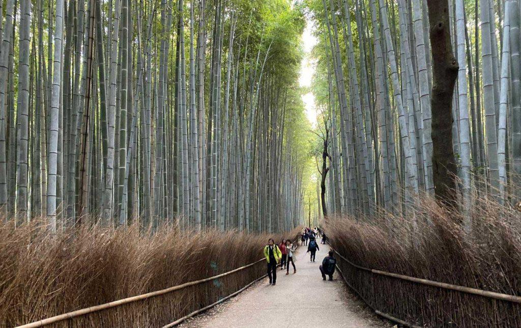 бамбуковая роща арашияма