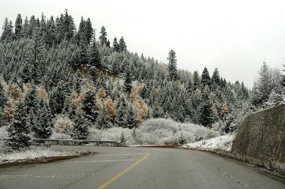 снег на деревьях близ долины цзючжайгоу в китае