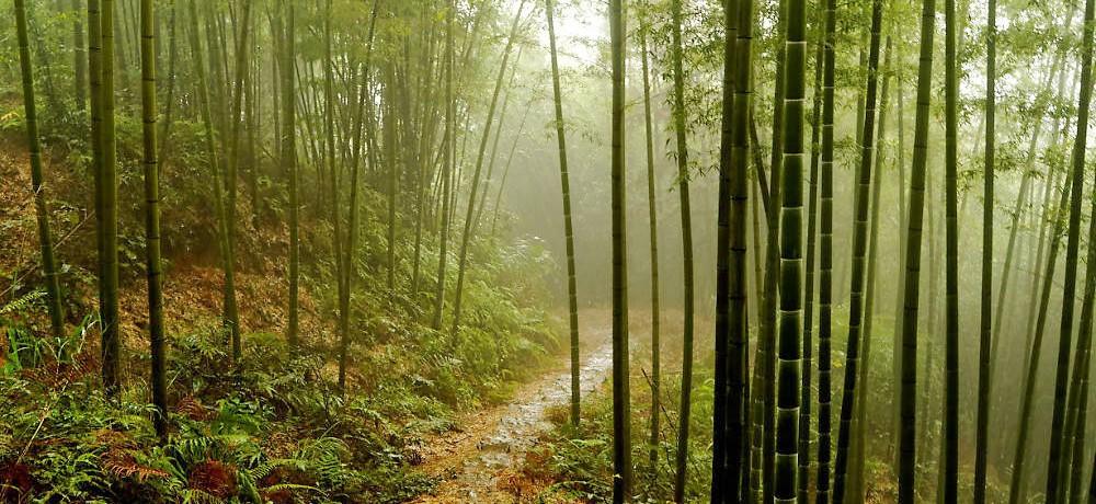 Бамбуковые леса и водопады Чишуи