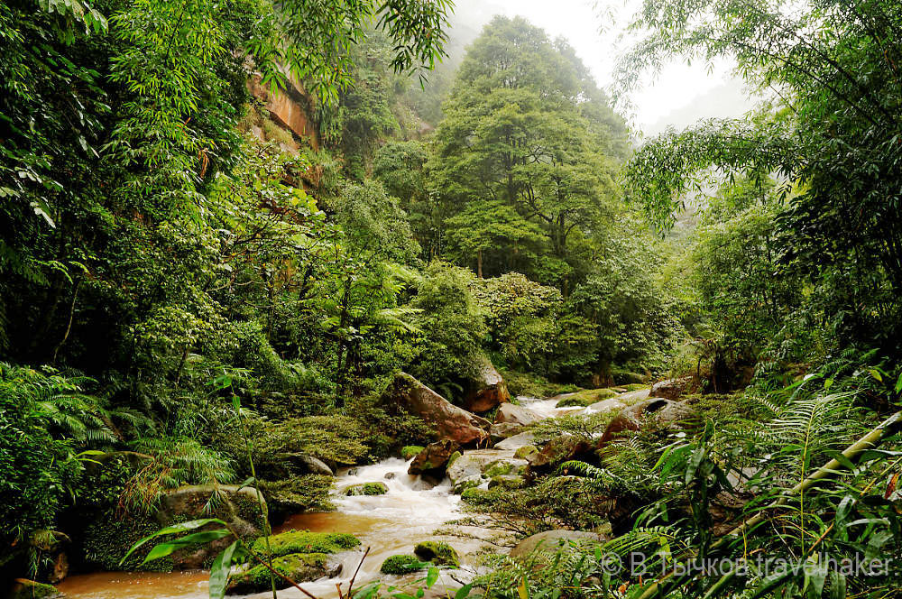 джунгли в Чишуи - Китай