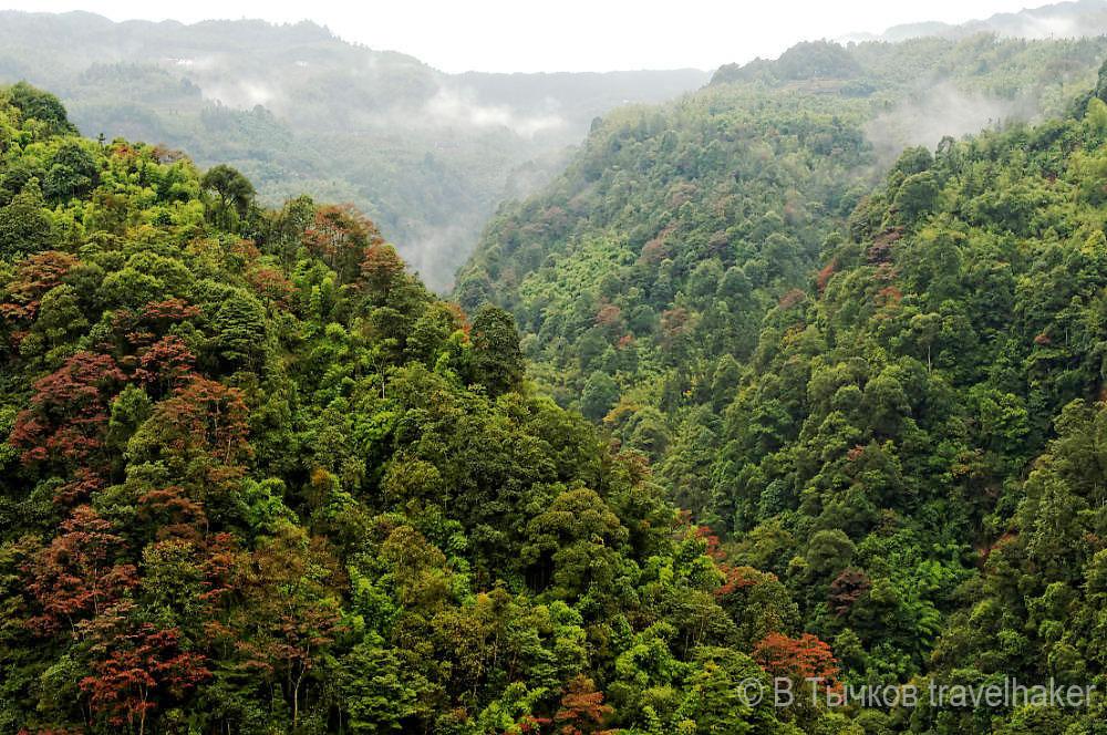 лес джунгли природа китая