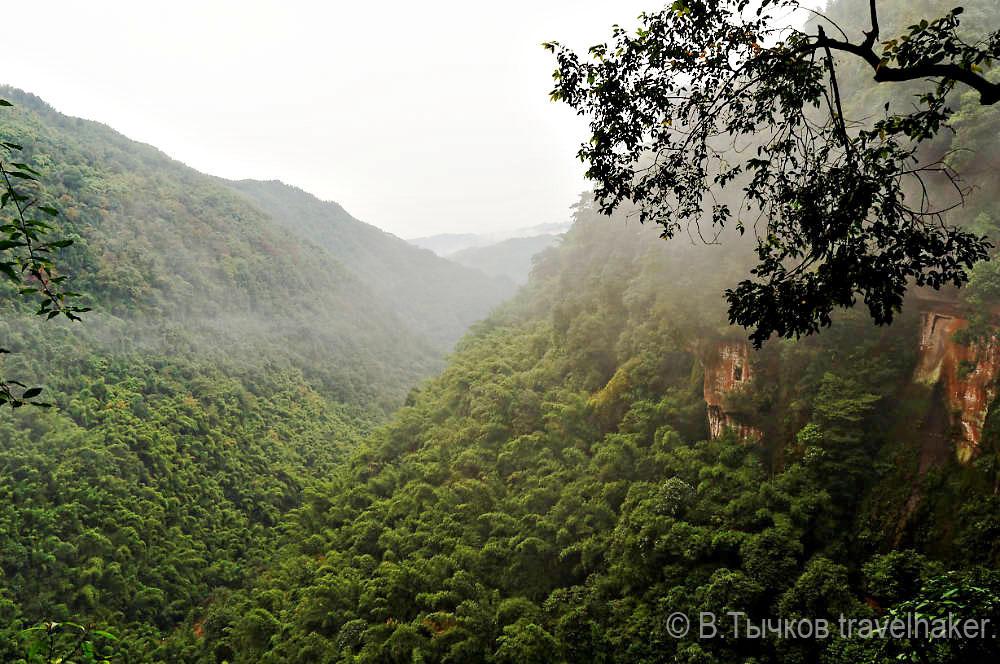 джунгли китая леса природа