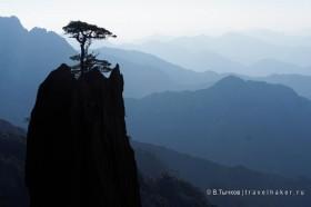 сосны и скалы в хуаншань