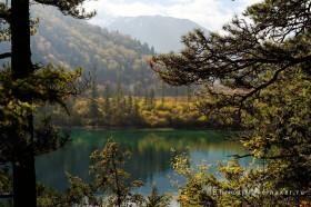 осенний лес в долине цзючжайгоу