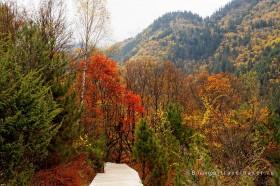 лес осенний и горы в цзючжайгоу китай